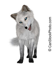 3D Rendering Arctic Fox on White - 3D rendering of an arctic...