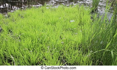 Green Grass by the River - Green grass by the river. Round...