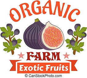 Figs. Farm organic exotic fruits emblem. Vector icon of...