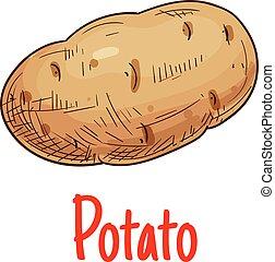 Potato tuber vegetable sketch icon