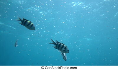 fish swim under water