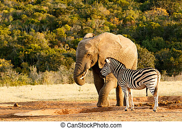 I told you there is no water Elephant - Elephant and Zebra...