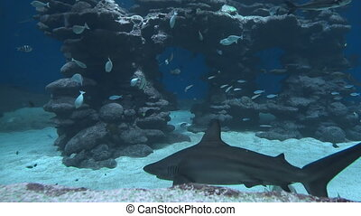 underwater life of fish and big sharks
