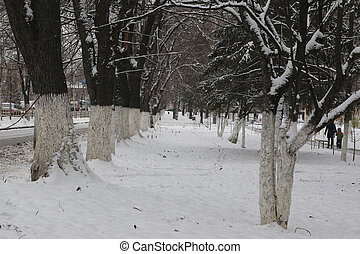 park winter trees and path - winter landscape snow-covered...