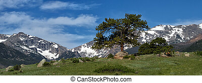A Tree Grows in the Mountains - A lone evergreen grows on a...