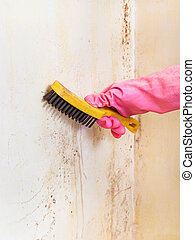 removing of mold from room wall with brush