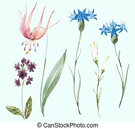 Watercolor wild flowers - Beautiful set with some hand drawn...