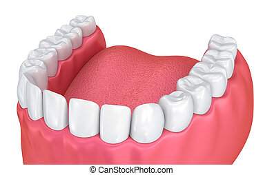 Mouth gum and teeth. Medically accurate tooth 3D...