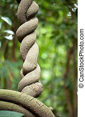 tropical vine detail - twisted tropical vine detail in...