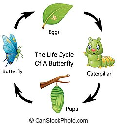 The life cycle of a butterfly - Vector illustration of The...
