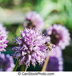 Honey bee on blue flower.