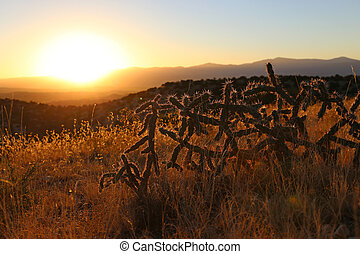 Cactus Sunset NM - Cactus Sunset in New Mexico, USA