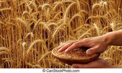 grain - showing grain with wheat field in background