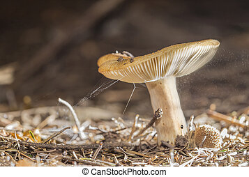 Small mushroom with flying spore around in the air.