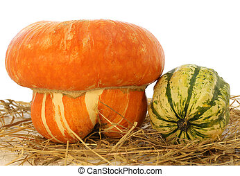 large orange pumpkin for halloween and a small green on the...