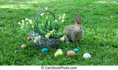 Little rabbit sitting at the basket on the grass