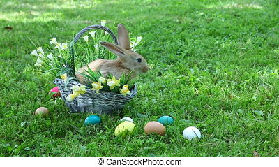 Little rabbit sitting at the basket
