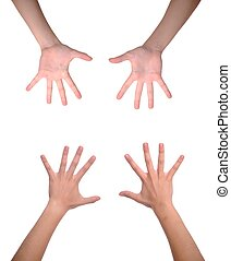 Woman hands - front and back woman hands (isolated on white...