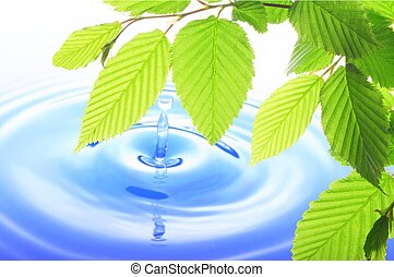 green leaf and water drop showing spa zen or wellness...
