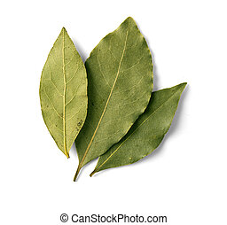 bay leaf on white