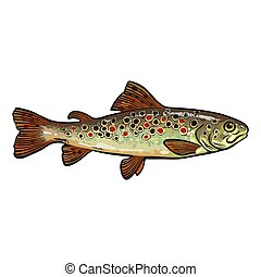 Hand drawn rainbow trout, sketch style vector illustration...