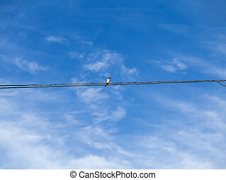 One common swallows on power lines.