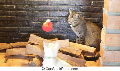 Two young cats playing toy in the smokestack display, stock...