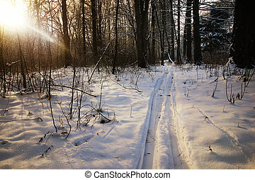 winter trails in the forest - winter landscape snow-covered...