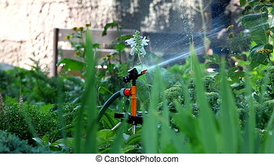 sprinkler pour grass - focus on gra