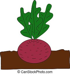 Planting beet. - Beet grow underground. Vector cartoon flat...