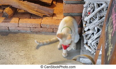 Young cat playing toy in the cafe - Young cat playing toy in...