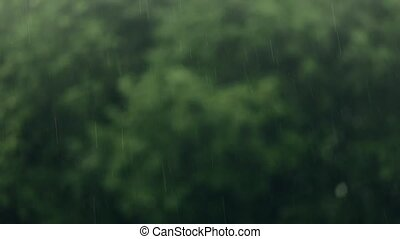 Summer rain. The focus is switched from drops on the trees