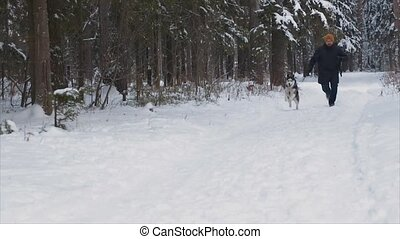 man runs with the dog in winter forest. Husky closeup