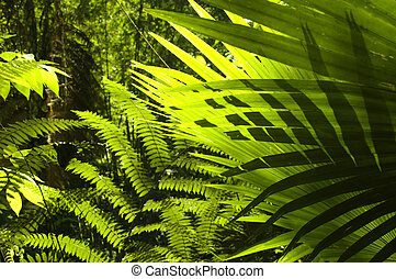 Tropical forest. - Sun shining to the palm leaf in tropical...