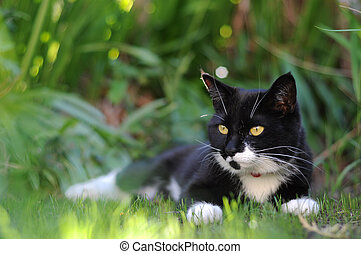 Jungle Cat - A black and white cat sheltering from the sun...