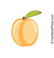 Peach Fruit Vector