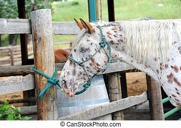 Homely Horse - Humorous image of a horse with its tongue...