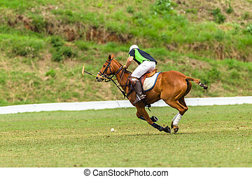 Polo Players Action - Polo players ponies game action