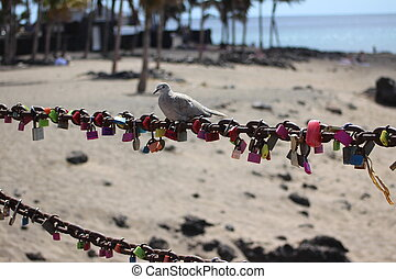 Reincarnation perhaps - A ring-necked dove sits on a safety...