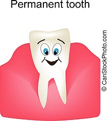 Permanent teeth in the gums. Children cartoon style....