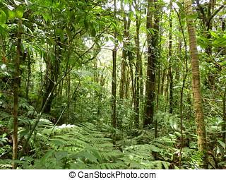 Selva, bosque, campo en otoño - Naturaleza verde, bosque