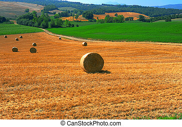 Toscana Landscape With Many Hay Bales In The Morning