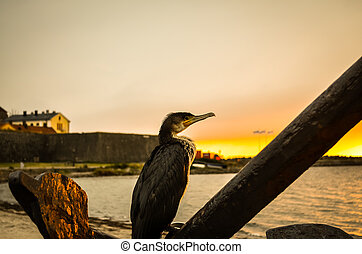 great cormorant bird sitting on anchor during sunset