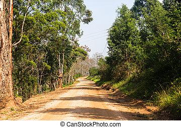 Dirt Road Trees
