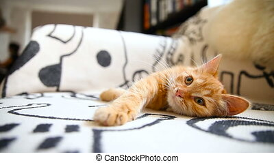 Cute ginger kitty comfortably snuggles on blanket in bed....
