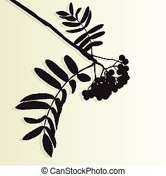 Mountain ash tree rowan berries tree branch leaves with...