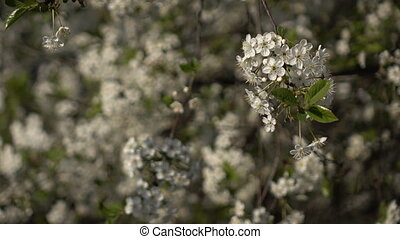 Flowering branches on a background of flowers and plans 2 -...