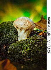 Wet mushroom puffball grows on green moss.