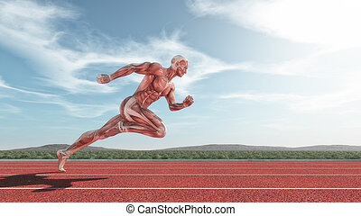Male muscular system running on red track . This is a 3d...
