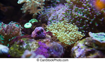 Colorful Underwater plants - Tropical undrewater plants...